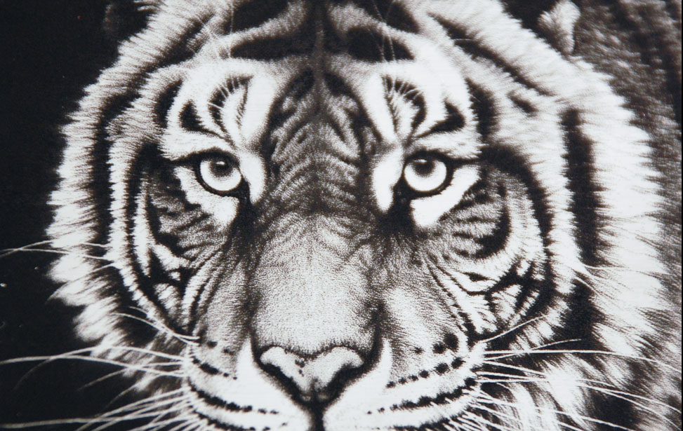 Tiger Photo - Engraved on Anodized Aluminum