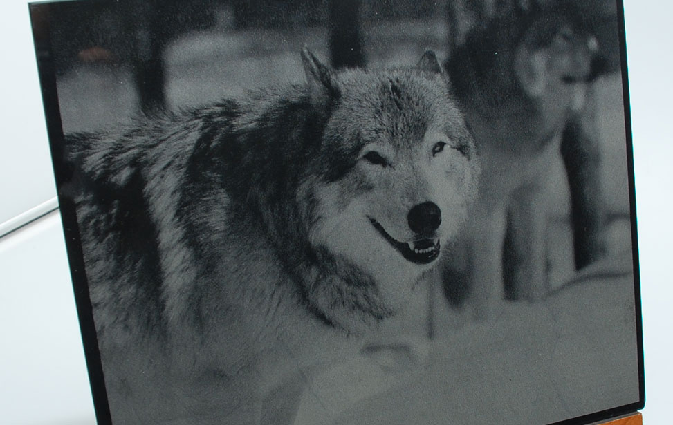Wolf Photograph on Marble